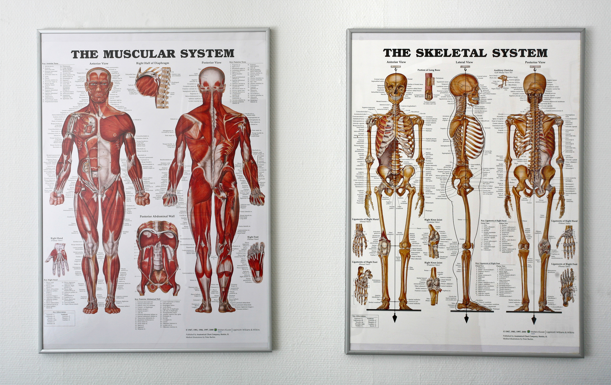 Chiropractic Systems